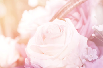 close up pink rose sweet love concept.