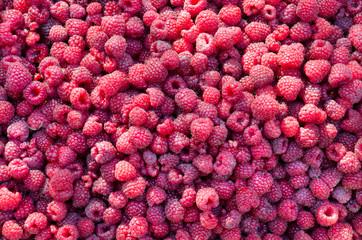Fresh ripe red raspberries