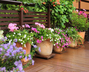 Flower pots on wooden terrace