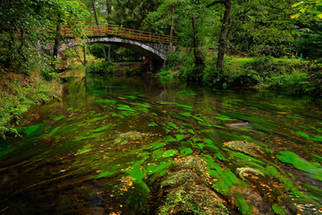 Stone bridge in green landscape with river and trees, forest in the background, Kamenice river, in czech national park, Ceske Svycarsko, Bohemian Switzerland park, Czech Republic