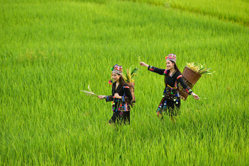 Two women wearing tribal costumes work in the fields of rice terraces .