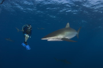 Dangerous big Shark Underwater diving sea picture