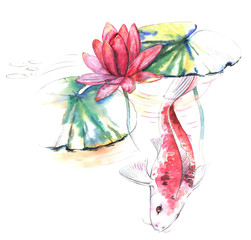 Hand-drawn watercolor illustration of the Koi carp fish in the water with lotus pink flower and leaves. Japanese style drawing on the white background