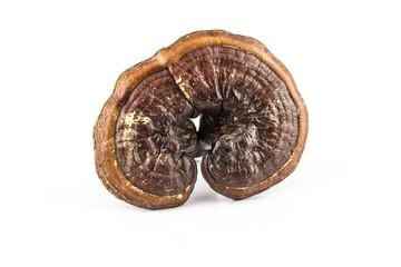 lingzhi mushroom or reishi mushroom.
