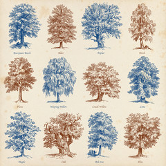 Common trees illustrations set