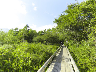 戦場ヶ原の遊歩道