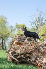 Hund Steht Auf Einem Riesigen Baumstamm