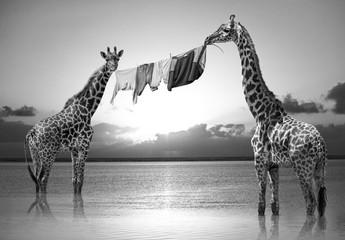 Hakuna Matata Giraffes Composite