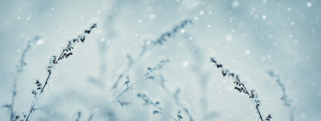Winter nature background. Winter landscape. Winter scene. Frozen