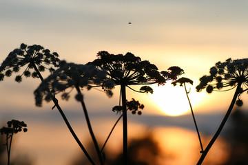 sunset nature tree sihleuette