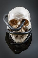 Sinister image of a creepy snake wrapped around a spooky human skull