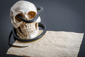 Sinister image of a creepy snake wrapped around a spooky human skull on aged paper
