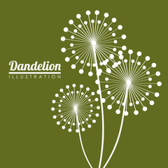 White dandelion icon. Summer seed plant and flower theme. Colorful design. Green background. Vector illustration