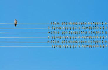Individuality concept, birds on a wire  Wall mural
