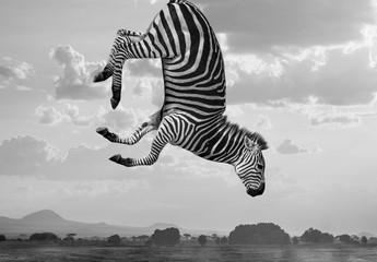 Hakuna Matata Zebras Composite