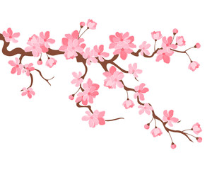 Vector illustration. Branch of Japanese cherry blossoms with beautiful flowers.Sakura. White background.