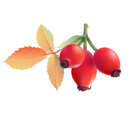 Rose hips. 