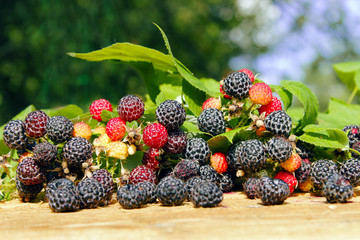 black raspberry with berries and leaves on the boards