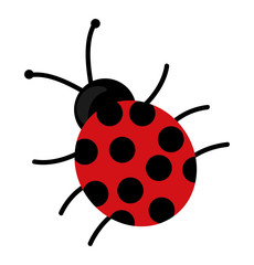 cute beautiful ladybug isolated vector illustration design