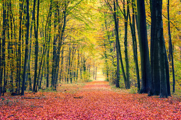 Wall Murals Road in forest Pathway in the autumn park