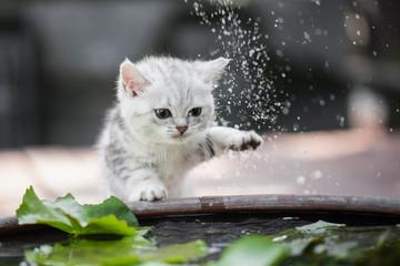 kitten shakes the water off its leg