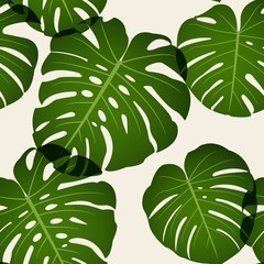 Seamless pattern of leaves monstera. Vector.