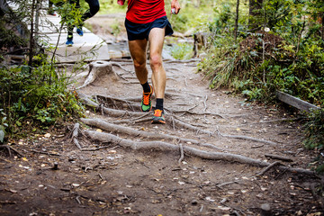 Fototapete - marathon runner running in woods trail earth and exposed tree roots