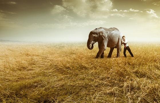 Elefant auf dem Feld