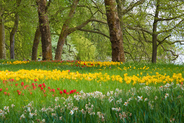 Many different tulips in the spring park of Mainau island