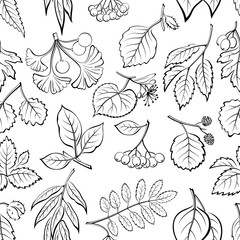 Seamless Nature Background with Pictogram Tree Leaves, Willow, Hawthorn, Poplar, Aspen, Ginkgo Biloba, Elm, Alder, Linden, Rowan, Chestnut Black Chokeberry and Beech Black on White Vector