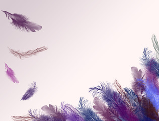 Purple Fether Background