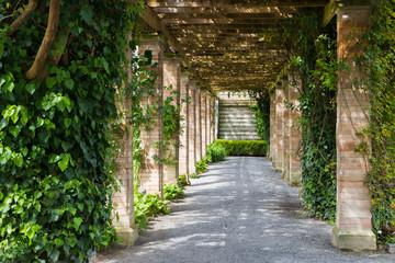 Fototapeta Prospective of ivy tunnel