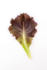 Red leaf lettuce isolated on white background