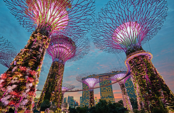 Supertrees at Gardens by the Bay. Singapore