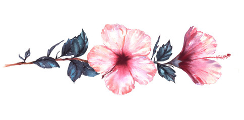 Hand-drawn watercolor floral illustration of the tender white with pink hibiscus flowers. Natural drawing isolated on the white background. Romantic tropical blossom.