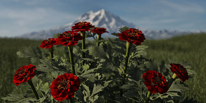 Blumen und Berg