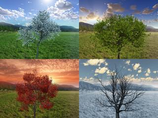 Vier Jahreszeiten Frühling Sommer Herbst Winter Baum, Four Seasons tree