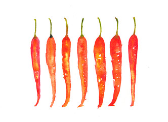 Red hot chilies on white, watercolor painting