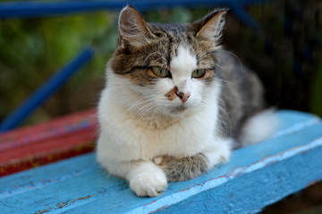 The cat is lying on the bench.