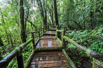 Beautiful rain forest at Angka nature trail in Doi Inthanon national park,Thailand
