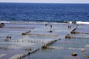 Plantations of seaweed, Nusa Penida, Indonesia