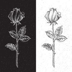 Retro roses. Vector  hand drawn roses black and white backgrond