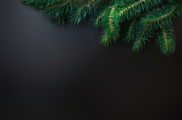 Fir tree Branches over black background with copy space / Christ