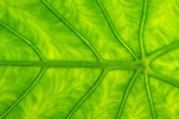 Wall Murals Nature leaf texture