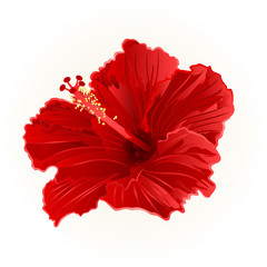 Red hibiscus simple tropical flower vector illustration