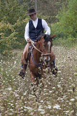 cowboy a cavallo tra l'erba alta