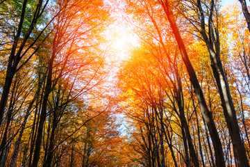 Autumn forest in Transylvania