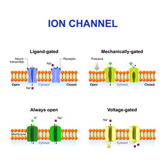 Types of ion channel