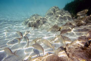 In fondo al mare blu: pesci rocce e acqua cristallina