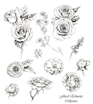 Hand-drawn collection of line art floral elements. Roses and dog-roses flowers and buds, different twigs for decorative compositions. Sketches